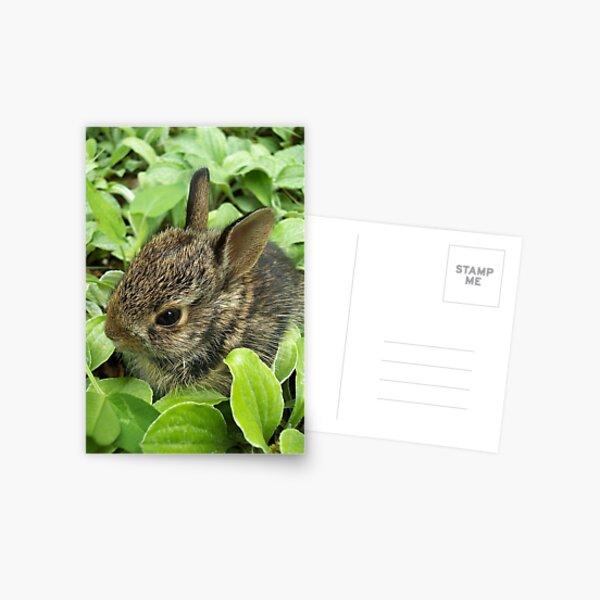 Sweet Baby Rabbit Postcard