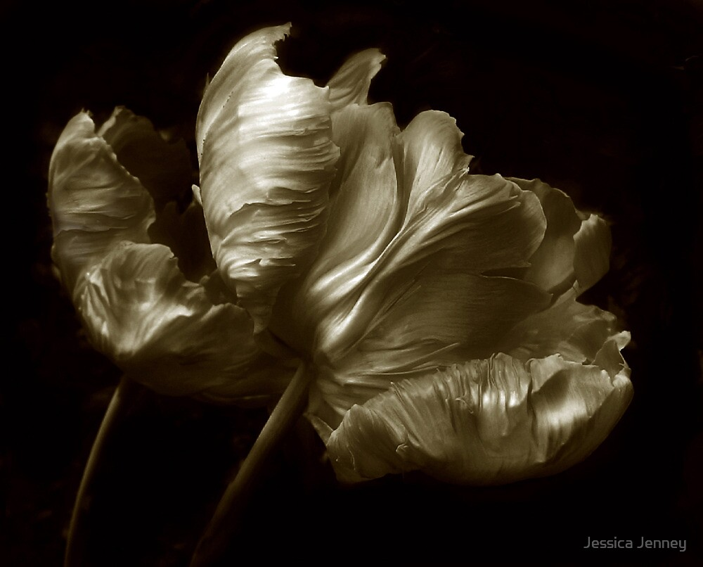 Tulips in Sepia by Jessica Jenney