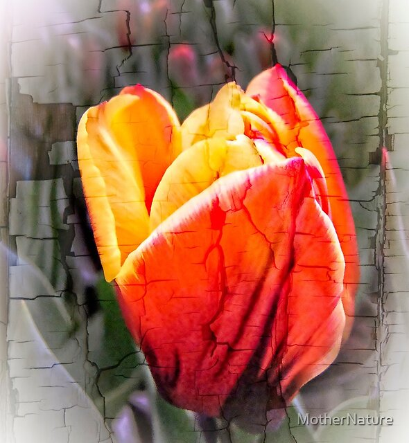 The Grand Reveal - Heart of the Tulip by MotherNature
