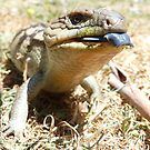 Blue - Tongue Lizard by Clare101