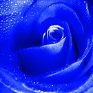 Blue Rose. by Vitta
