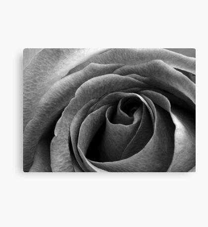 Beauty without colour Canvas Print