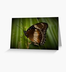 Happy Butterfly Greeting Card
