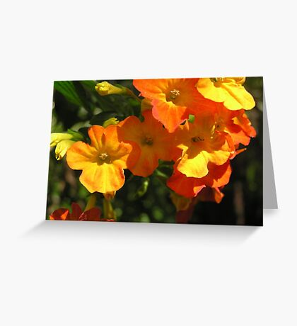 Orange Clivea  Flowers Greeting Card