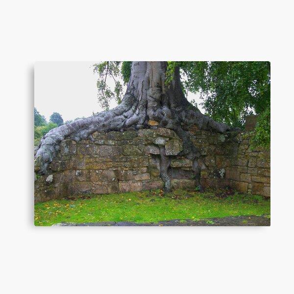 Treewall Canvas Print