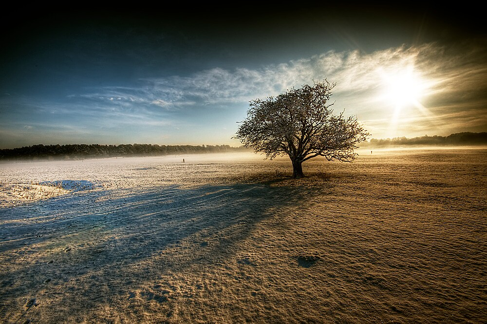 Winter Sun - The Curragh, Co. Kildare by Gerry Chaney