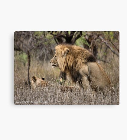 THE LION – 'KING OF THE JUNGLE'  Panthera leo Canvas Print
