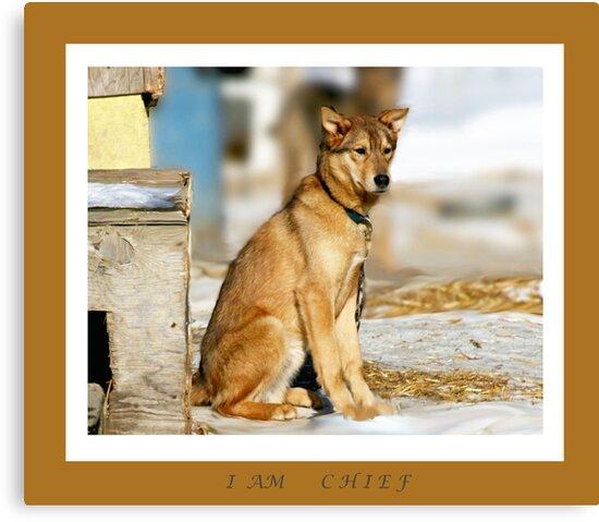 I AM........CHIEF by Brenda Dow