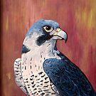 Falcon by Julie Ann Accornero