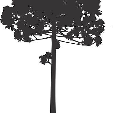 Parana Pine Tree by kazumaoski
