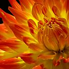 On Fire by Margaret Barry