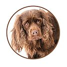 Sussex Spaniel Portrait by SMiddlebrook