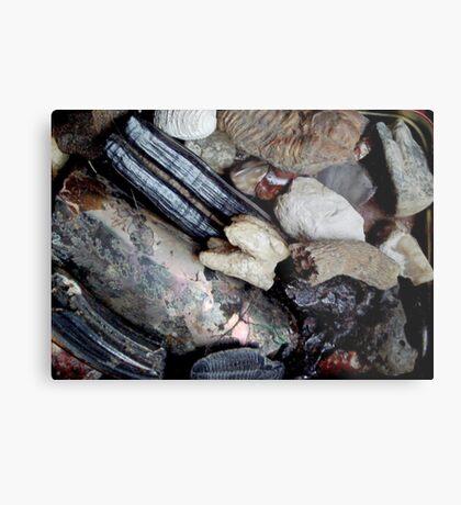 Needful Things - Fossils Metal Print