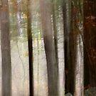Emily's Light by Lynn Wiles
