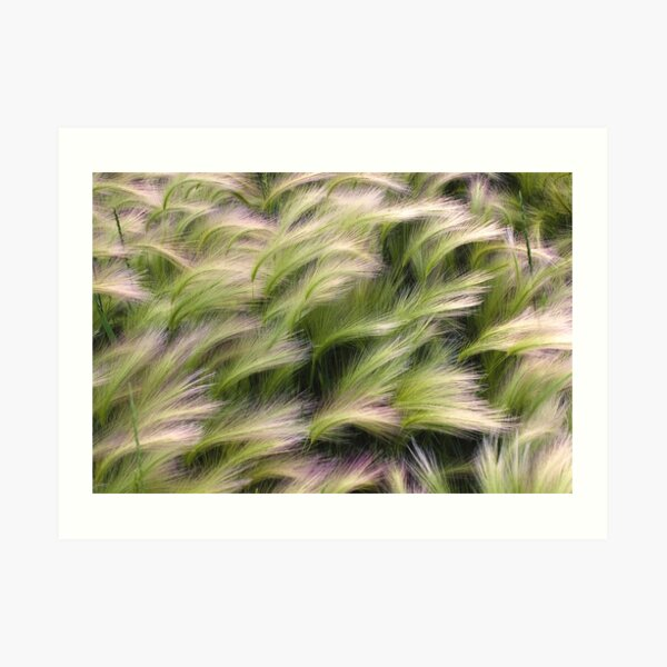 Foxtail from Above Art Print
