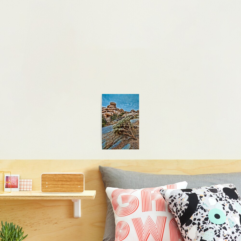 Joshua Tree on the Rocks Photographic Print