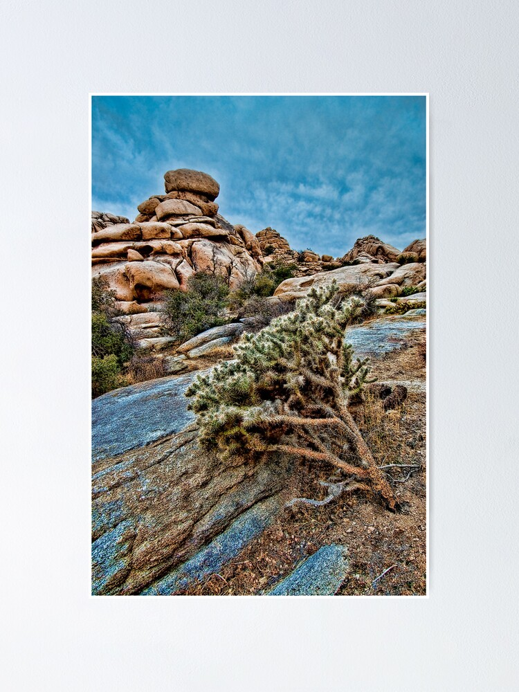 Alternate view of Joshua Tree on the Rocks Poster
