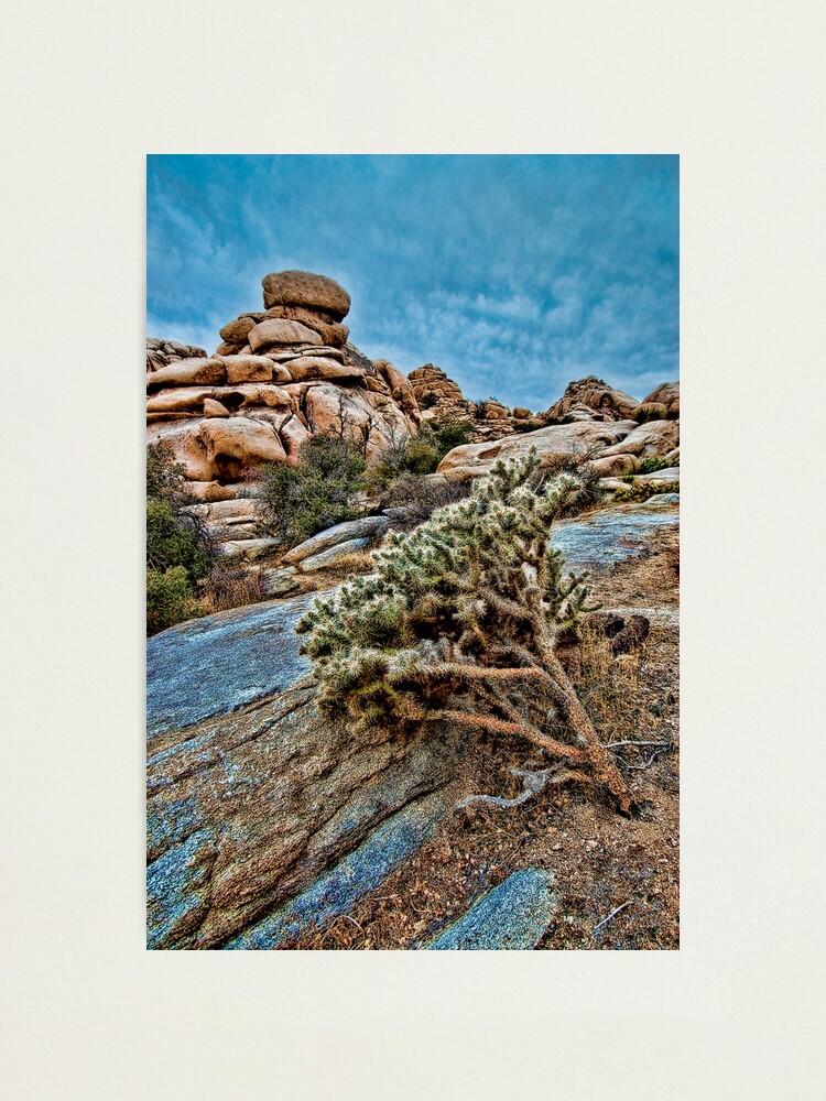 Alternate view of Joshua Tree on the Rocks Photographic Print