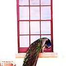 A Peacock on the window by oddoutlet