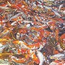 Fishy business by Julietmsampson