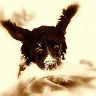 springer i sepia by Alan Mattison