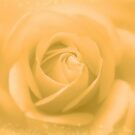 Bright Golden Rose  by hurmerinta