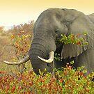 Mopani Elephant by Marie Strydom