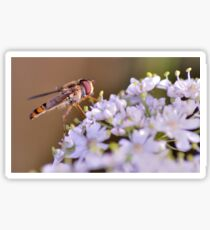 Hoverfly Sticker