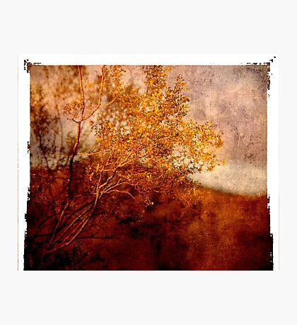 Yellow Tree Photographic Print