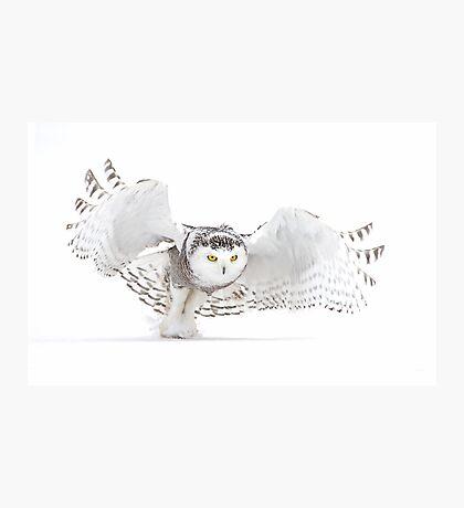 Jazz Wings - Snowy Owl Photographic Print