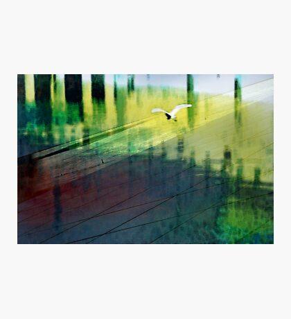 Flight of the Egret Photographic Print