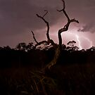 Natures Strobe by Peter Pevy