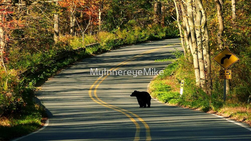 #624  New Jersey Black Bear by MyInnereyeMike