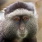 Blue Monkey by Peter Denness