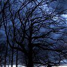 Evening Tree by Lolabud