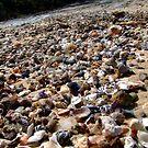shell beach by leahb