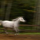 running horse by Klaus Bohn