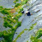 moss art by leahb