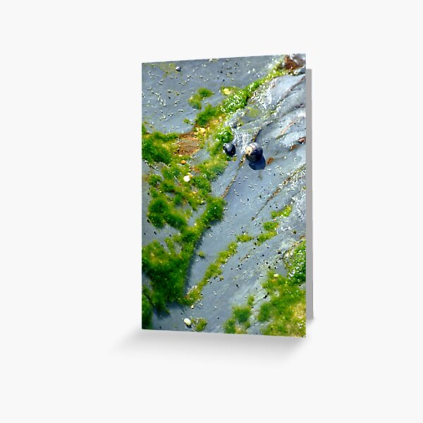 moss art Greeting Card