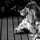 BUFFY THE DOG by hugo