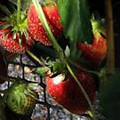 Strawberries by Len Bomba
