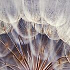Botanical Macro Abstract Wall Art. Dandelion. Salsify by tanjica