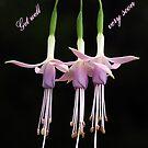 My Garden Ballerinas  by Bev Pascoe