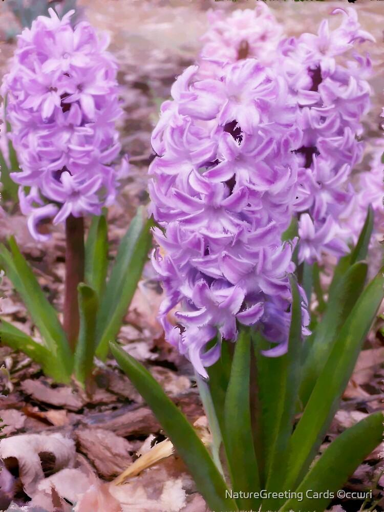 Lavendar Spring by NatureGreeting Cards ©ccwri
