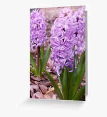 Lavendar Spring Greeting Card