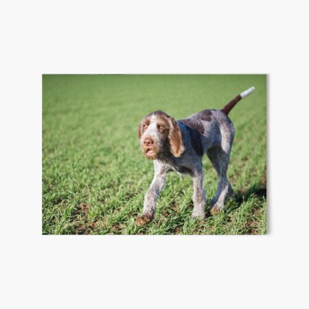 Italian Spinone Puppy Portrait Art Board Print