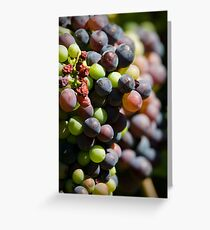 Pinot Veraison Greeting Card