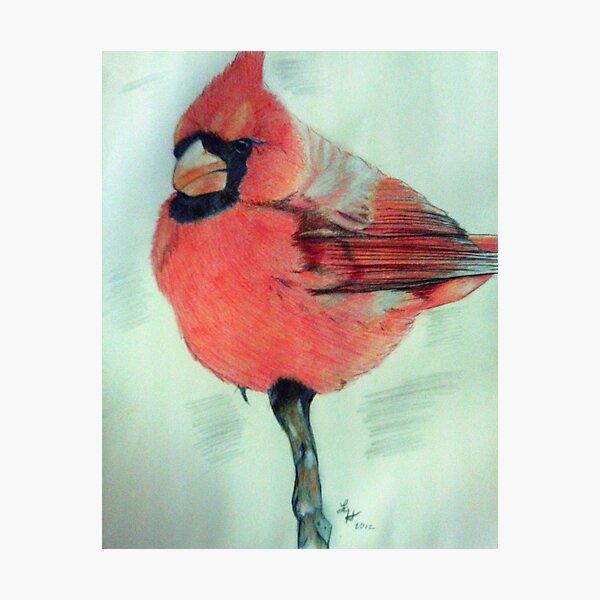 Cardinal Study Photographic Print