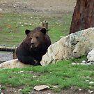 On Bear Watch !!!,  by AnnDixon