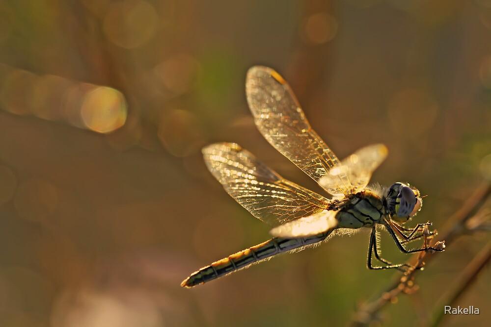Little nature by Rakella